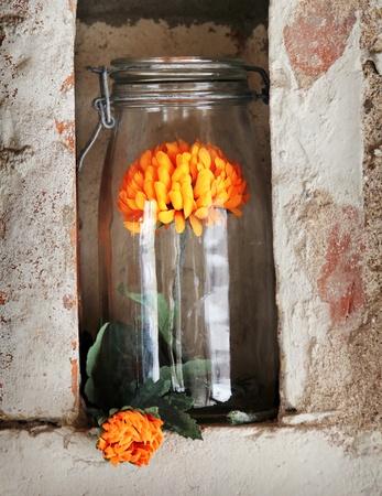 Bon verre avec une date de fleur d'oranger dans le créneau serré Banque d'images - 12862004