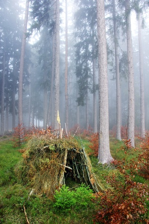 lonely hut in the forest with fog photo