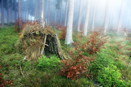 survive: lonely hut in the forest with fog