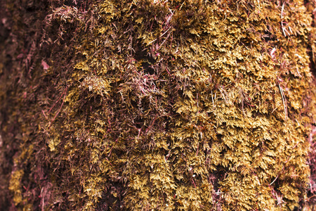 evergreens: Background, moss. Evergreens. Stock Photo