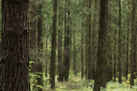 underbrush: Blurred in the forest