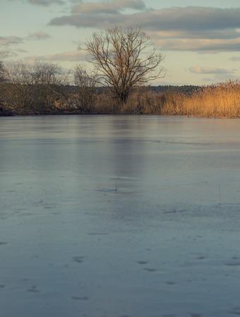 frozen lake: Frozen lake, Lonely dead tree.Calm landscape, early spring.