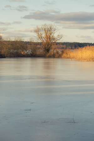 frozen lake: Lonely tree over a frozen lake.