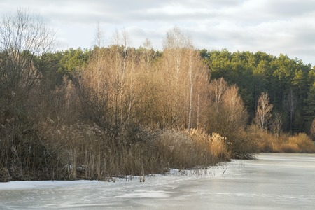 frozen lake: Edge of the Forest coming out to the frozen lake. Stock Photo