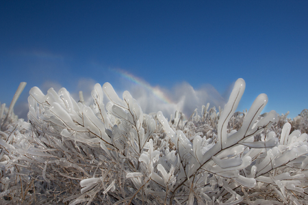The Winters Tale. Icy geysers plants on background, fairy- landscape of Kamchatka. Rainbow  a   blue sky. Stock Photo