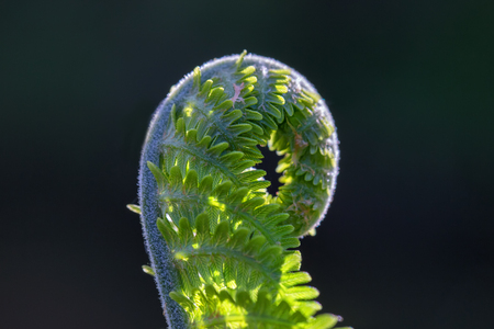 Fern plant in the wild