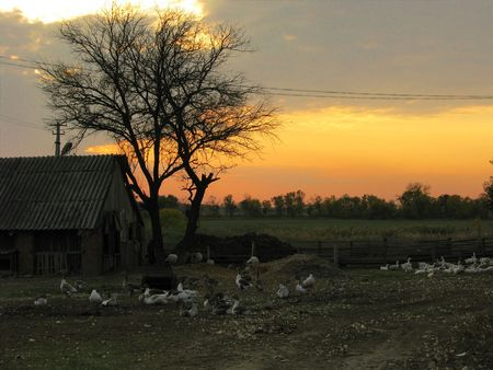 sunset on the farm shut in september with farms pets photo