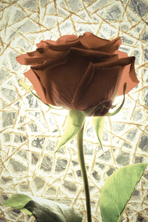 Red rose against sunlight. Stock Photo - 12011385