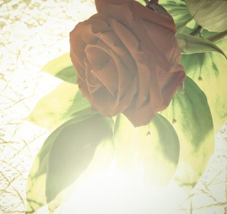 Red rose against sunlight. Stock Photo - 12027638