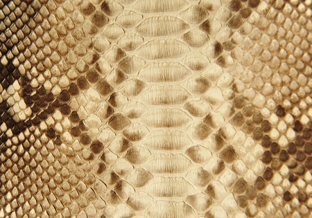 Portrait of snake skin.  Up close. Stock Photo