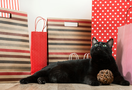 Big black cat laying among shopping bags photo
