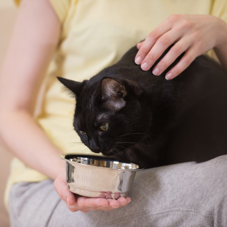 Unrecognizable woman feeding her black cat at home photo