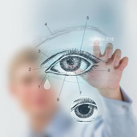 Male medical doctor working with virtual interface examining human eye Standard-Bild