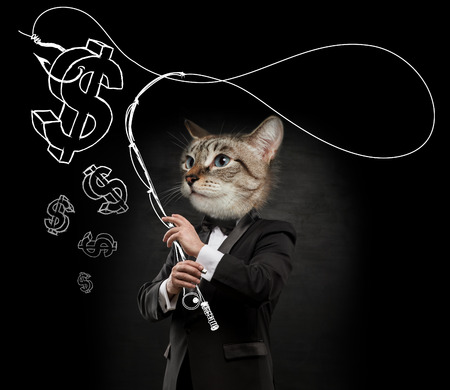 Business man with cat head fishing money photo