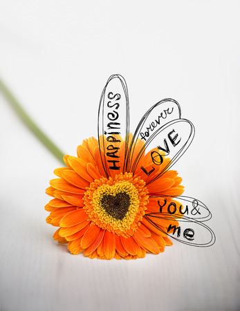 divination: Heart from orange daisy-gerbera on white table with drawing sketch of divination Stock Photo