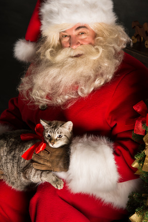 new year cat: Santa Claus making a most wanted gift to a child - he gives tabby cat to new owners. Santa placing cute cat near Christmas tree Stock Photo