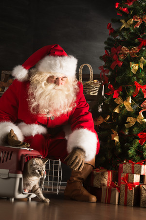 Santa Claus making a most wanted gift to a child - he gives tabby cat to new owners. Santa placing cute cat near Christmas tree photo
