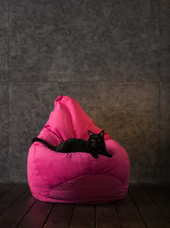beanbag: Cat and Beanbag at home or office