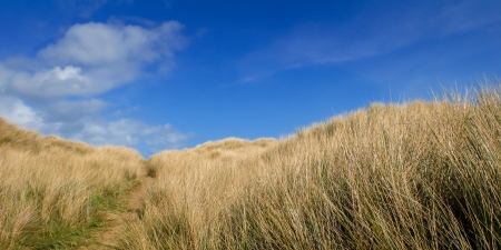 tall grass: Brown tall grass on a hill under the clear blue sky