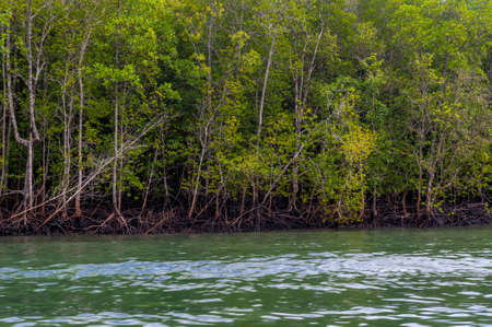 langkawi: Langkawi Rainforest Boat Tour Stock Photo