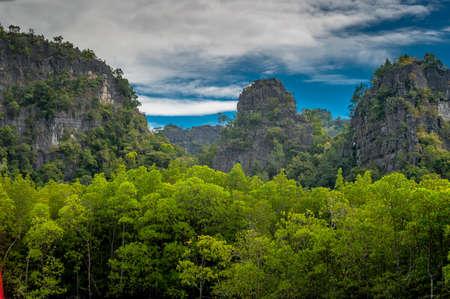 geoforest: Langkawi Rainforest