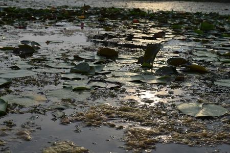 muddy: Muddy waters Stock Photo