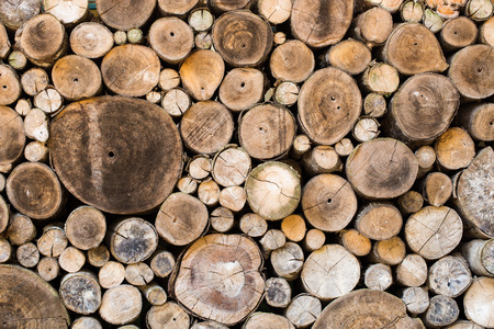 Wood texture background have many logs that cuted from big tree and small tree photo
