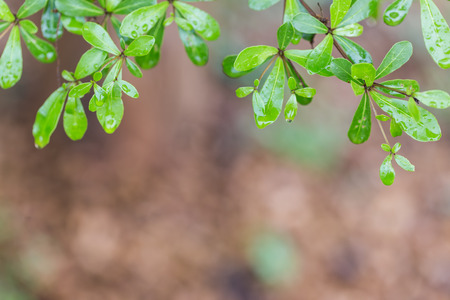 tree leaves with water drops photo
