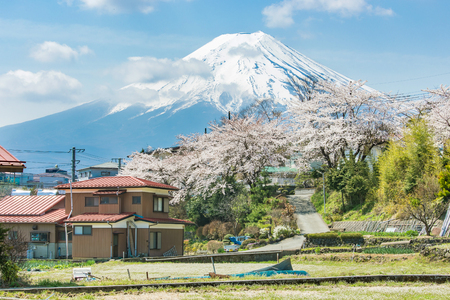 Cherry blossoms or Sakura and Mountain Fuji in spring season in countryside