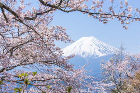 Cherry blossoms or Sakura and Mountain Fuji in spring season Stock Photo