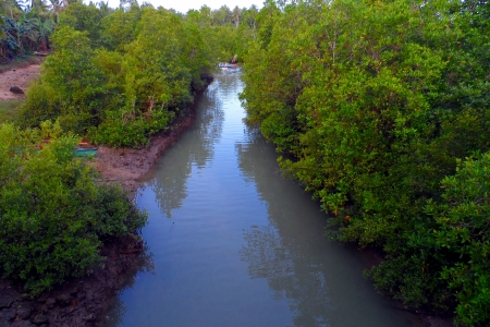 Mangroves along with a river in Brgy  Victoria, San Remigio Cebu Stock Photo