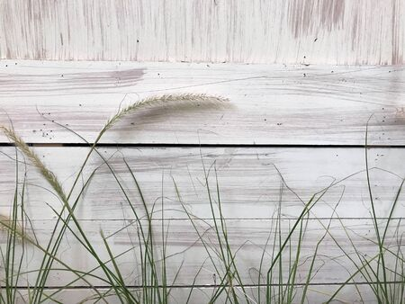 rough painted white wood panel wall with poaceae or unwanted flora and green weeds at the bottom of frame