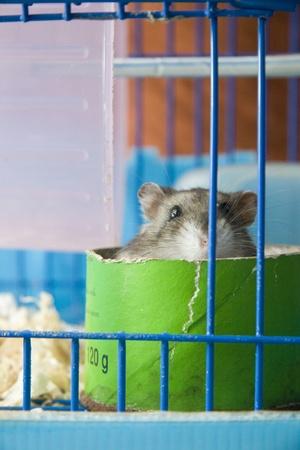 rat Stock Photo - 10942095
