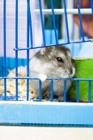 rat Stockfoto
