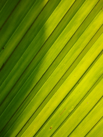green leaf line background