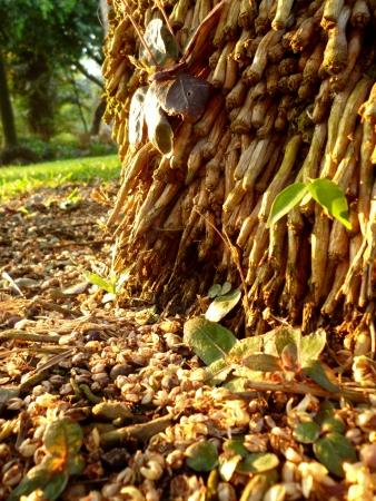 root tree texture Stock Photo