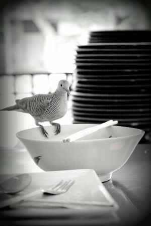 A pigeon, In Thailand they  live in the city and eating with people in university canteen Stock Photo - 23264723