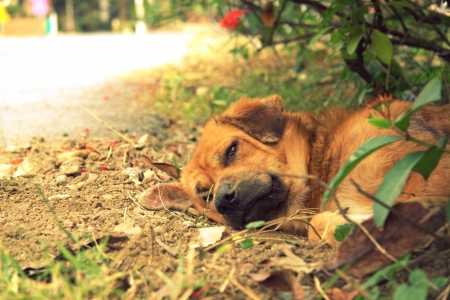 slatternly: Stray dog sleep beside the road