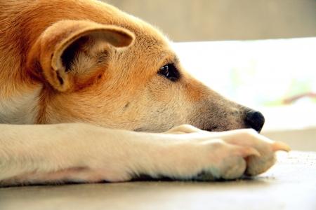 Stray dog living alone  Stock Photo