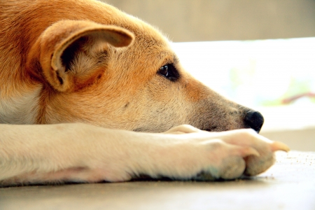 slatternly: Stray dog living alone  Stock Photo