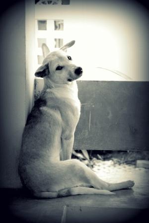 Stray dog living alone Stock Photo - 23264727