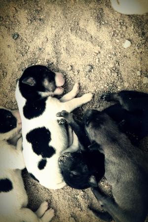 sluttish: Neglected puppies