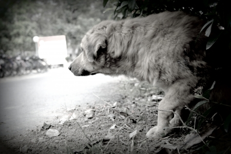 Stray dog living on the street  photo