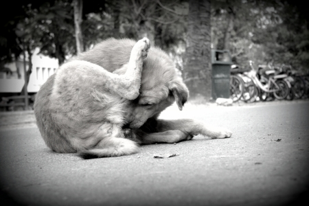 slatternly: Stray dog living on the street