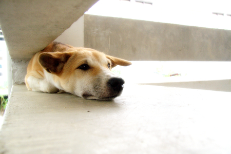 backstairs: Stray dog living alone  Stock Photo