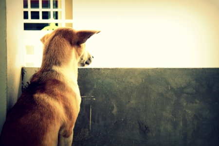 Stray dog living alone  photo