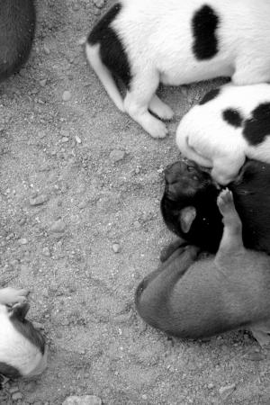 backstairs: Cuccioli abbandonati Archivio Fotografico