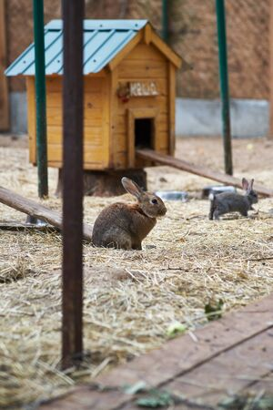 In the photo are rabbits. They live in an aviary, feed on grass, carrots, cabbage and apples. Food rabbits give people, the owners of the aviary.