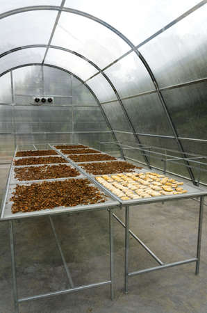 Solar greenhouse is a way of using the sun to heat greenhouse and crop drying sheds  Stockfoto
