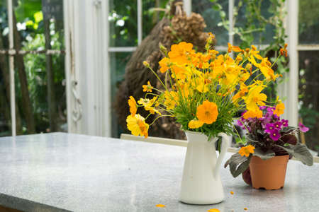 Decorative yellow flowers in the white jug on the table in the glass house Stockfoto